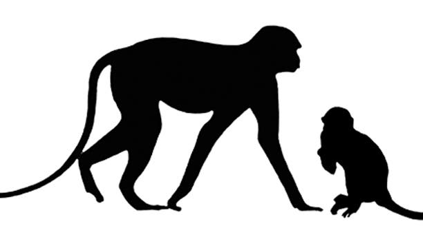 Typical guenon (Allenopithecus), left, compared to how large Nanopithecus browni, middle, would have been. The typical domestic cat included for scale comparison. (Credit: Carol Ward)