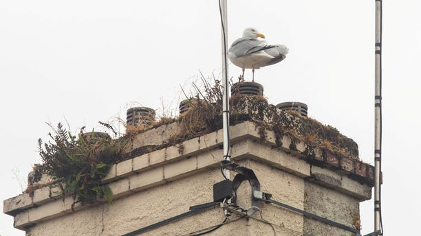 Neighbors claim that they've spotted a suspicious-looking seagull spotted in the area close to where the dog disappeared.