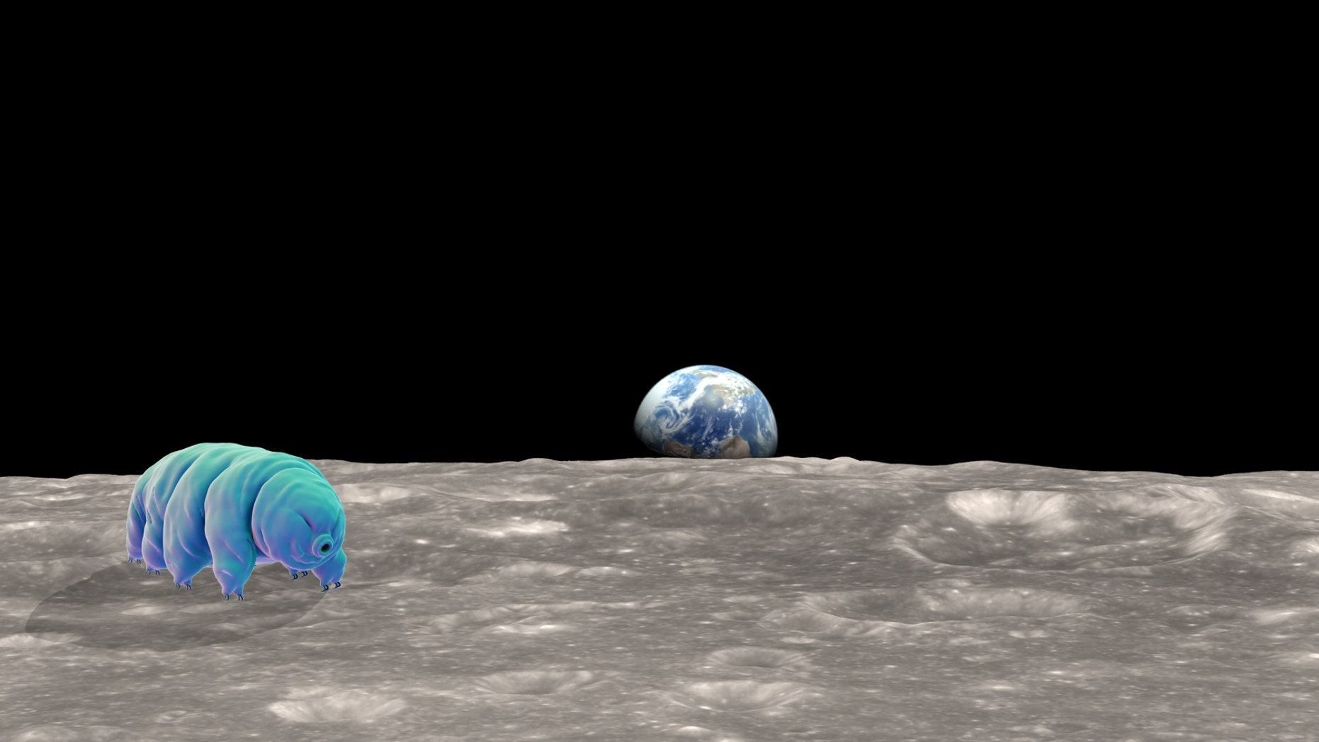 If any creature could survive a crash-landing on the moon, it would probably be a tardigrade.