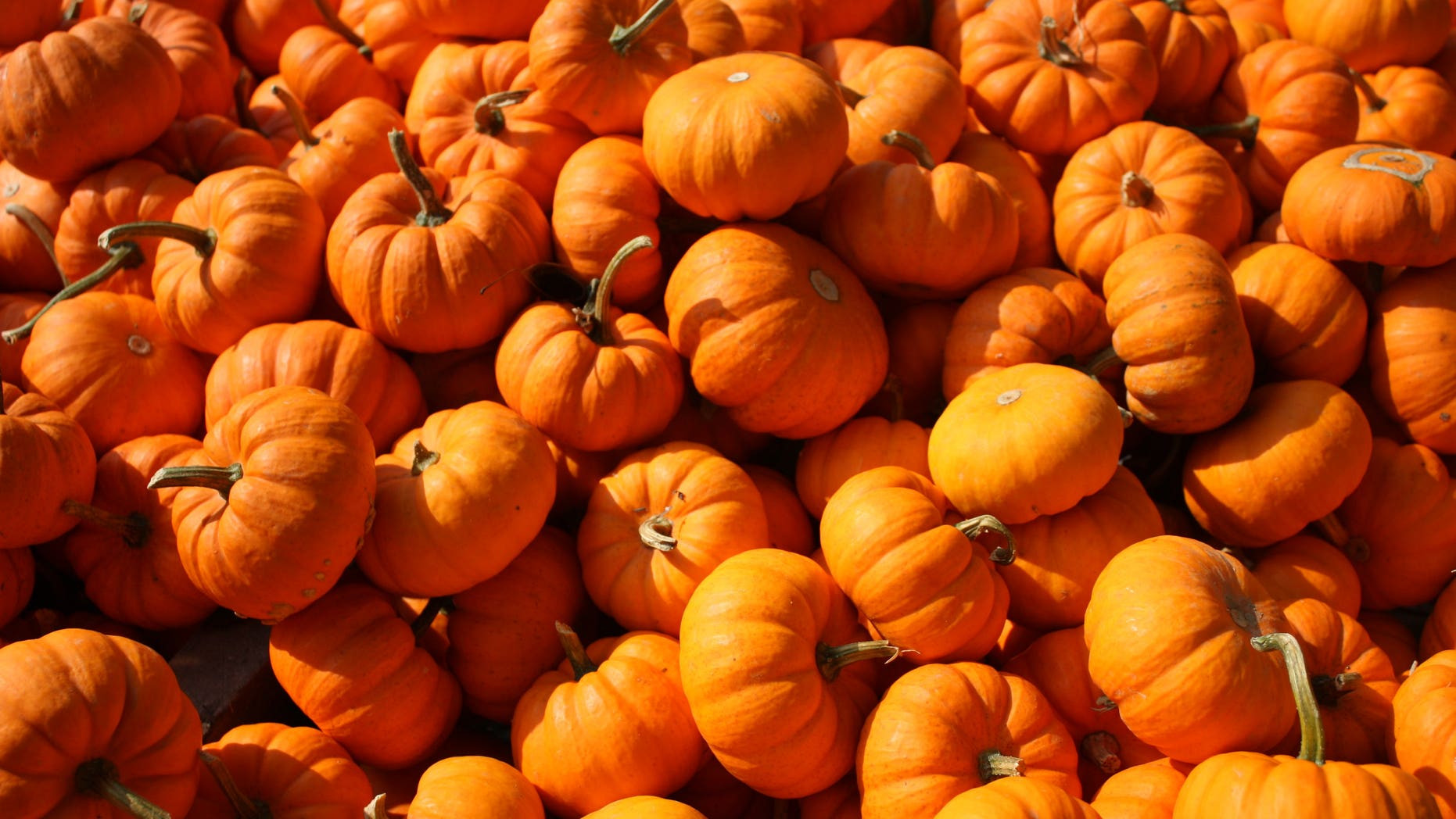 The survey of 2,000 Americans found that, of those who enjoy pumpkin spice treats, 41 percent say they'd give up carbs to get pumpkin spice coffee for life.