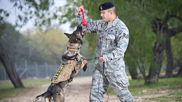Military working dogs are trained with the 341st Training Squadron at the Lackland Air Force Base (AFB) in San Antonio, Texas