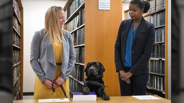 Hatty the labrador was sworn in on Tuesday. (State's Attorney Kim Foxx)