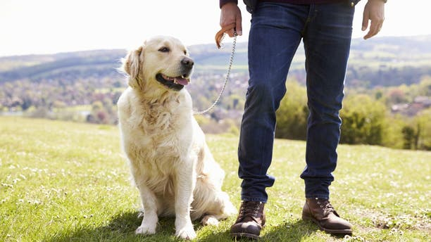 Owning a dog could have significant benefits for heart attack and stroke survivors.