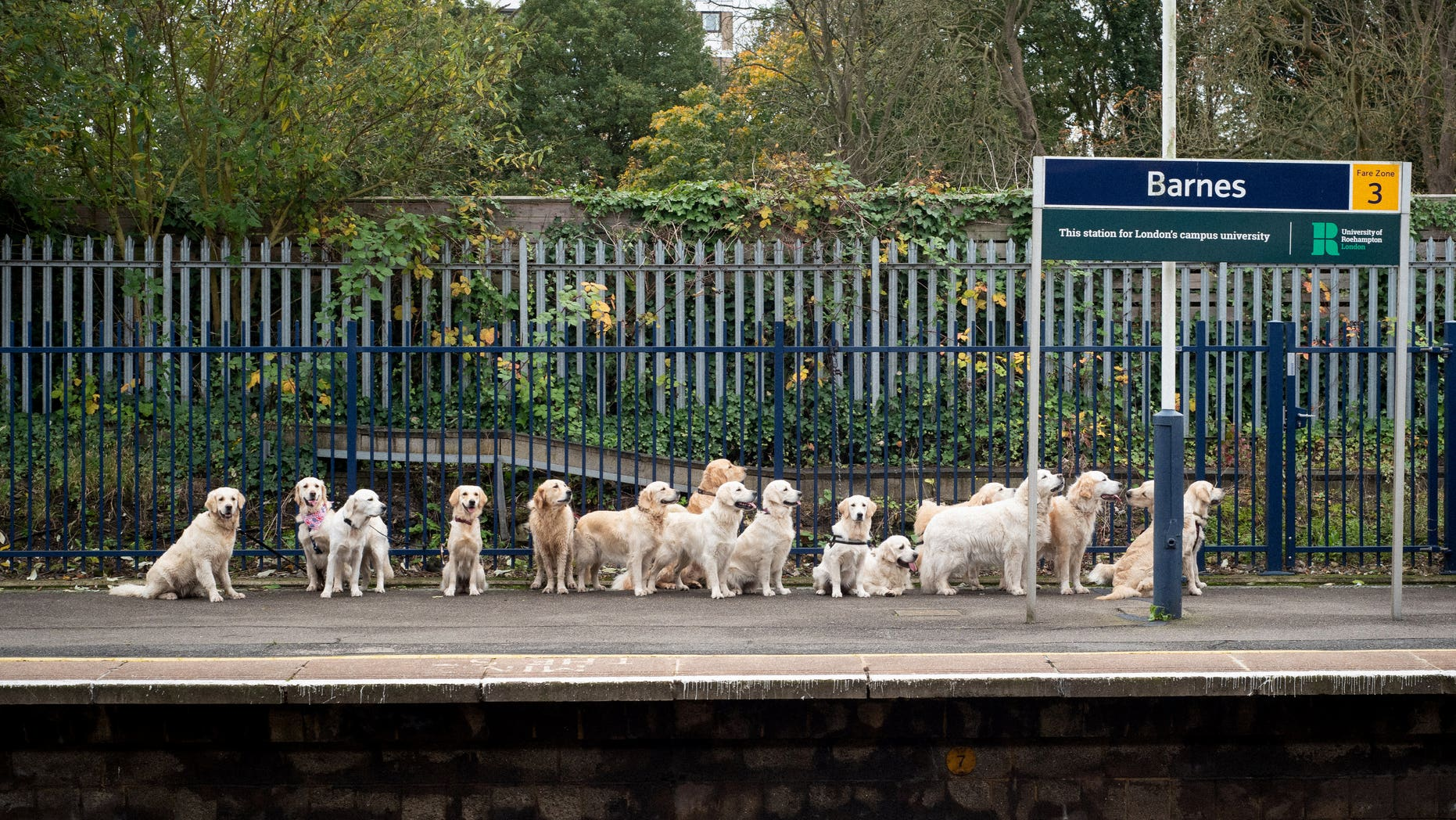"The adorable dogs, dubbed ""good boys and girls"" by witnesses, were spotted patiently waiting on the platform."
