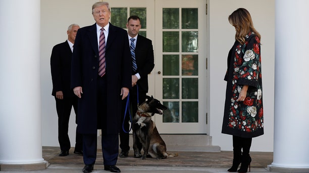 """President Trump called Conan, pictured here at the White House on Nov. 25, an """"incredible"""" dog after he helped take down ISIS leader Abu Bakr al-Baghdadi."""