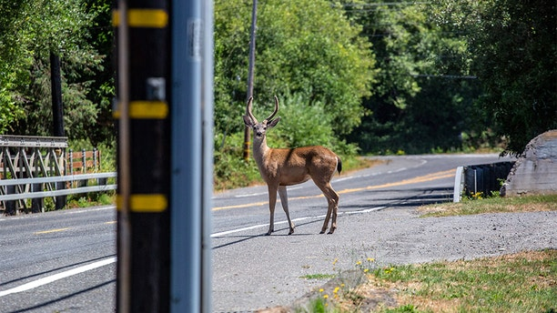 Lakeway officials discontinued its trap, transport and process (TTP) deer program last August amid public outcry over viral video. (iStock)