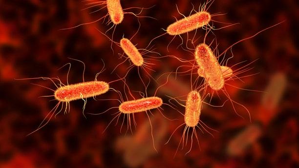 Escherichia coli bacterium.