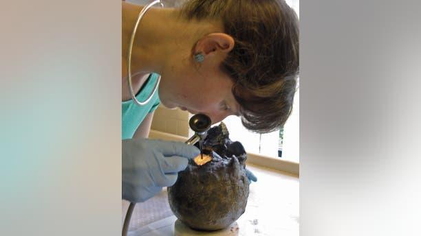 Rachel Cubitt of the York Archaeological Trust examining the Heslington brain. (York Archaeological Trust)