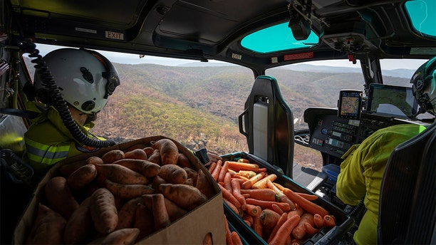 NSW's National Parks and Wildlife Service staff flying with carrots and sweet potatoes before air-dropping them for animals in bushfire-stricken areas around Wollemi National Park.