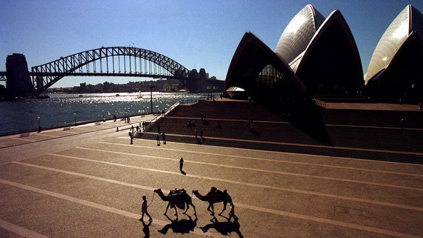 Camels were first introduced into Australi in the mid-1880s to transport supplies across the desert.