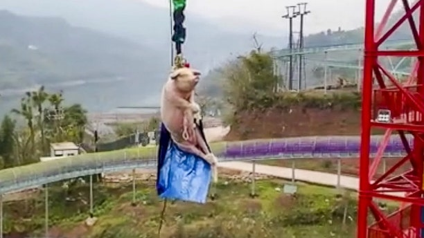 The stunt was reportedly to celebrate the opening of the new bungee jump attraction at the theme park.