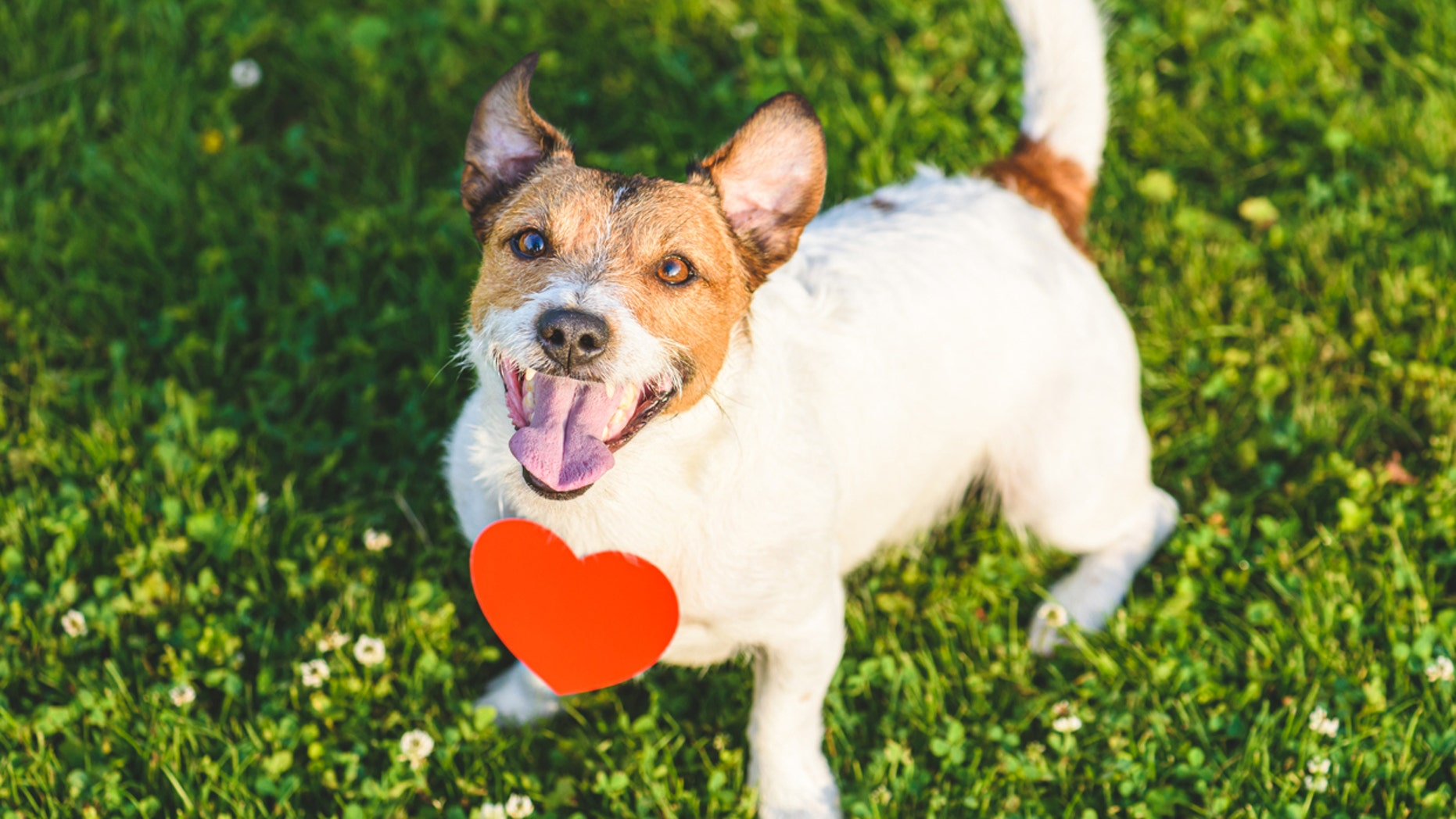 Pet dating site 'Pinder' -- based on human dating app Tinder -- helps owners find friends for their pets. (iStock)
