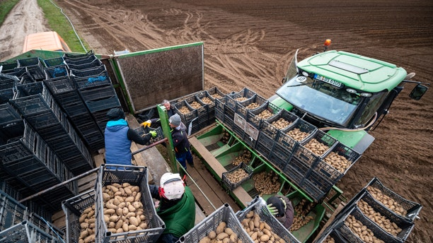 Workers fill a planter with early potatoes of the Annabelle variety in Germany.