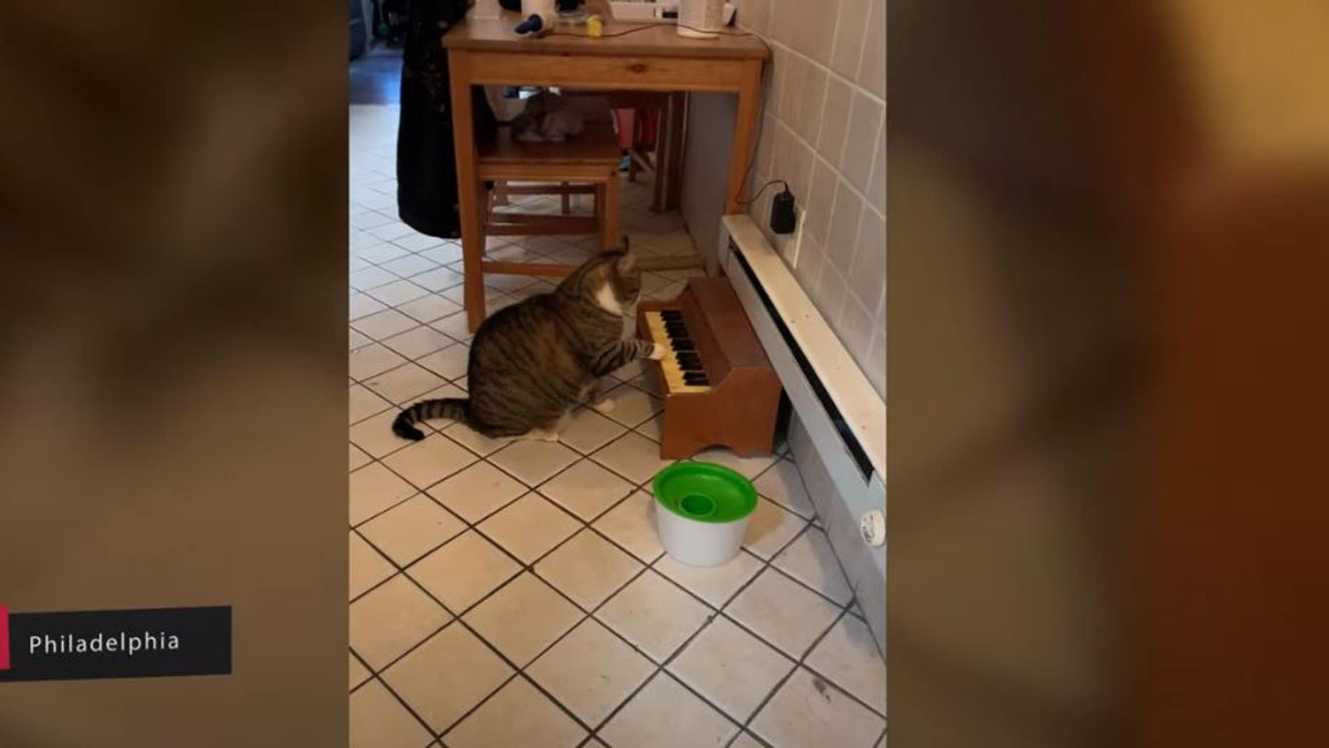 A musically-inclined feline was recorded playing his sad hunger song for his owner, Kate Nyx.
