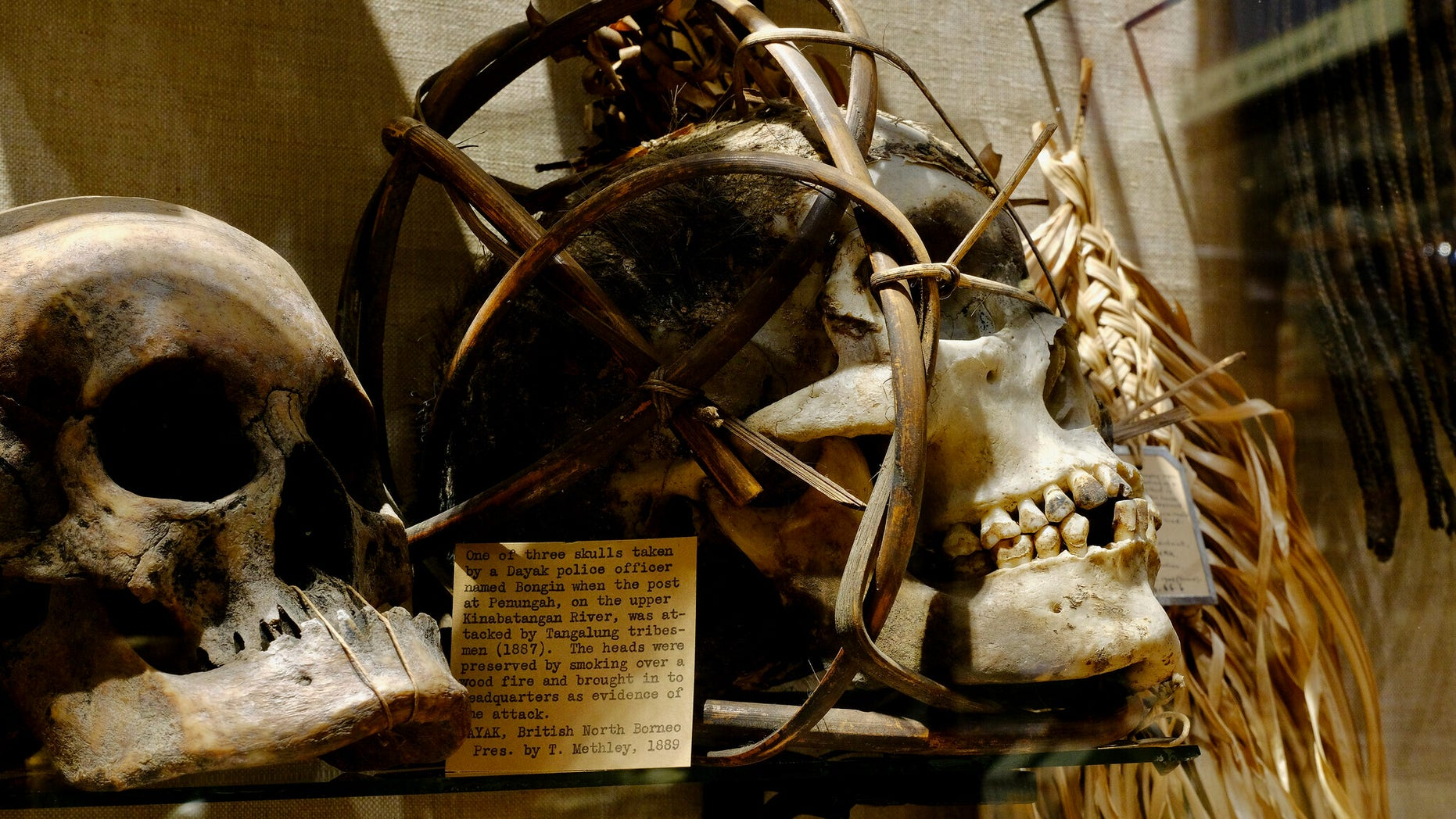 In July 2020, the Pitt Rivers Museum at the University of Oxford removed its shrunken heads and human remains from public display.