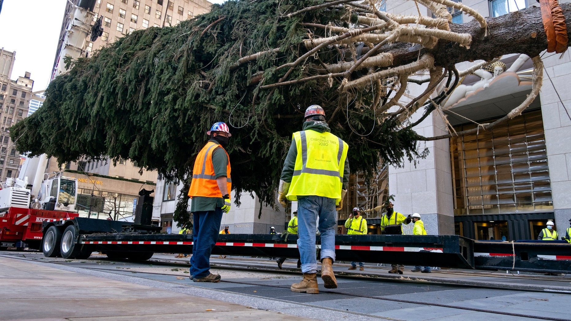 The 2020 Rockefeller Center Christmas tree, a 75-foot tall Norway Spruce that was acquired in Oneonta, N.Y., is prepared for setting on a platform at Rockefeller Center Nov. 14, in New York. (AP Photo/Craig Ruttle)