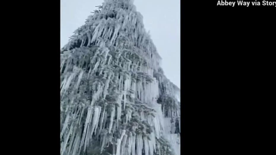 Tree covered in beautiful icicles spotted by snowboarder