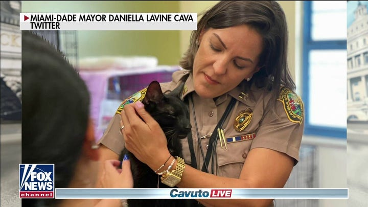 Missing cat from Surfside, Florida collapse found alive wandering the wreckage