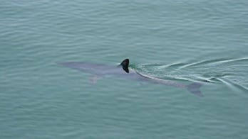 Should increased shark sightings off East Coast concern beachgoers?
