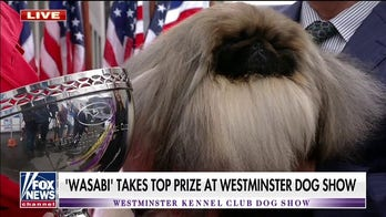Westminster Kennel Club Dog Show winner joins Janice Dean at Fox Square