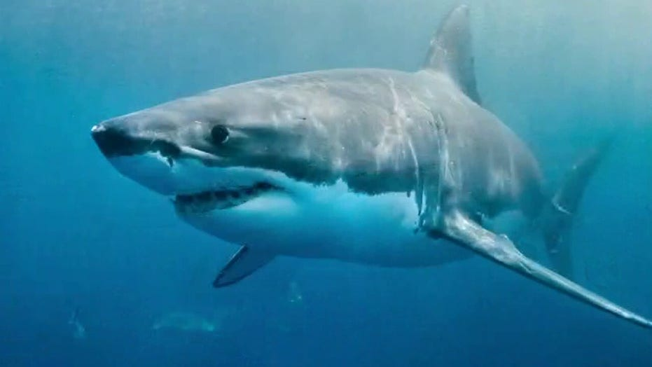 What to know about sharks on U.S. coastlines