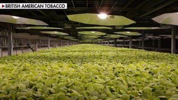 Tobacco giant claims plant-based COVID-19 vaccine is close to clinical testing