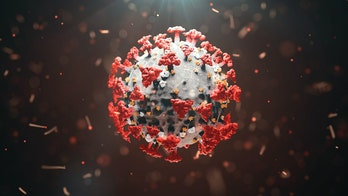 Coronavirus immunity could last more than 6 months, possibly years: study