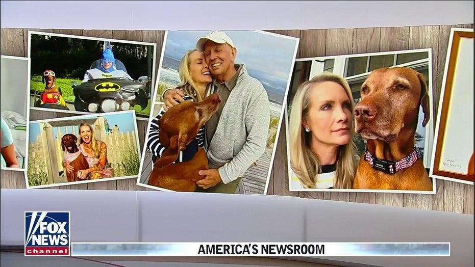 Dana Perino remembers Jasper, 'America's dog'