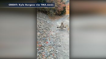Aggressive cougar makes threatening moves toward Utah runner