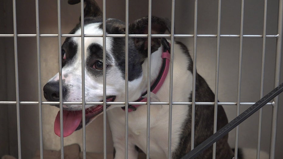 Animal shelters overwhelmed with more 'pandemic pets' being returned