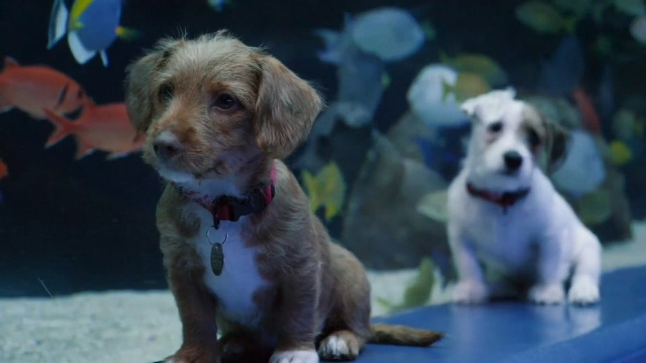 Adorable puppies visit the Georgia Aquarium during coronavirus closure