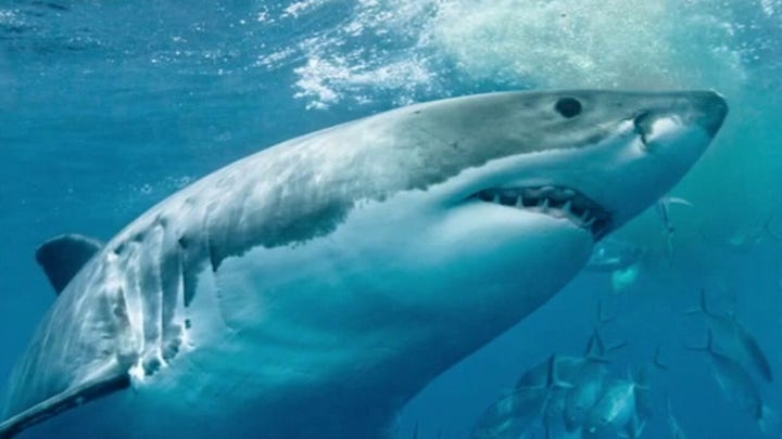Experts push to change perception on sharks, dangers associated