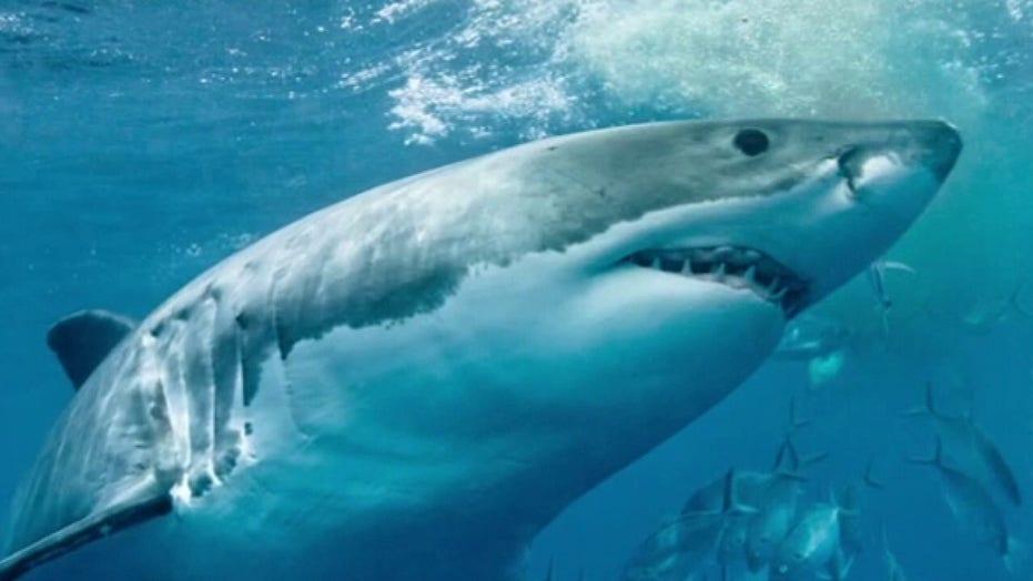 Shark expert blames 'Jaws' for unfairly stigmatizing sharks, hopes to change public's perception
