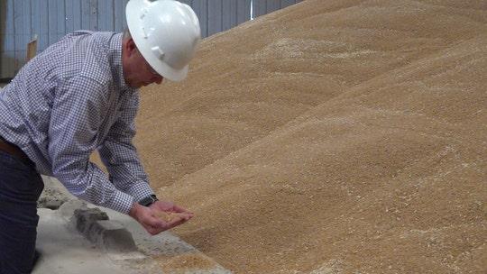 Arizona wheat farmers prosper amid COVID-19 as pasta sales soar