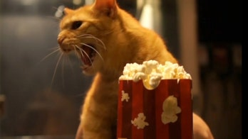 Independent theaters create 'Quarantine Cat Film Fest' to benefit struggling movie houses
