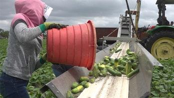 Florida farmers face severe losses amid coronavirus outbreak