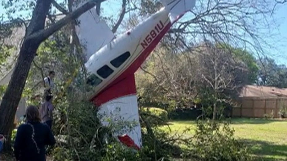 Two men, dog unharmed after plane crashes into tree