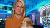 Martha MacCallum, family welcome new puppy