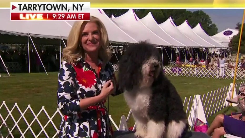 Remembering Chet Collier: Westminster Kennel Dog Show leader, Fox News Channel pioneer