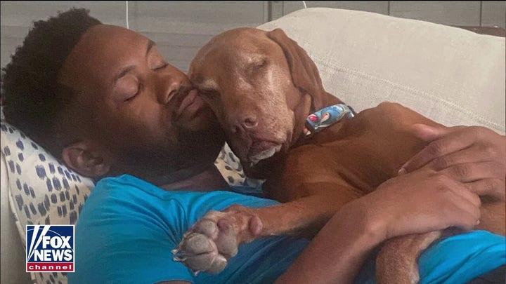 Dana Perino announces death of 'America's Dog,' Jasper