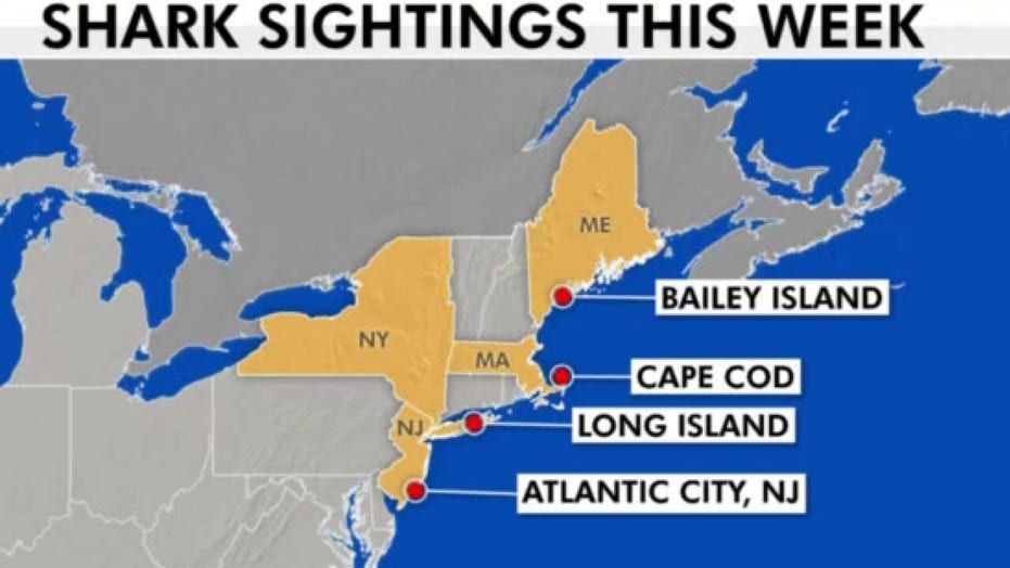 Great white shark tracked near Atlantic City, 3 spotted off Long Island