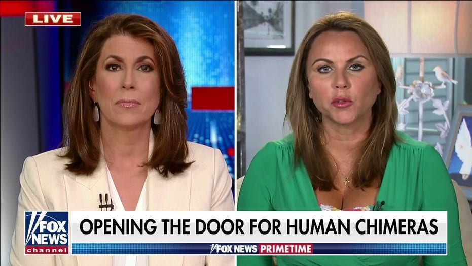 Lara Logan says new legislation may open the door for 'human chimera' research