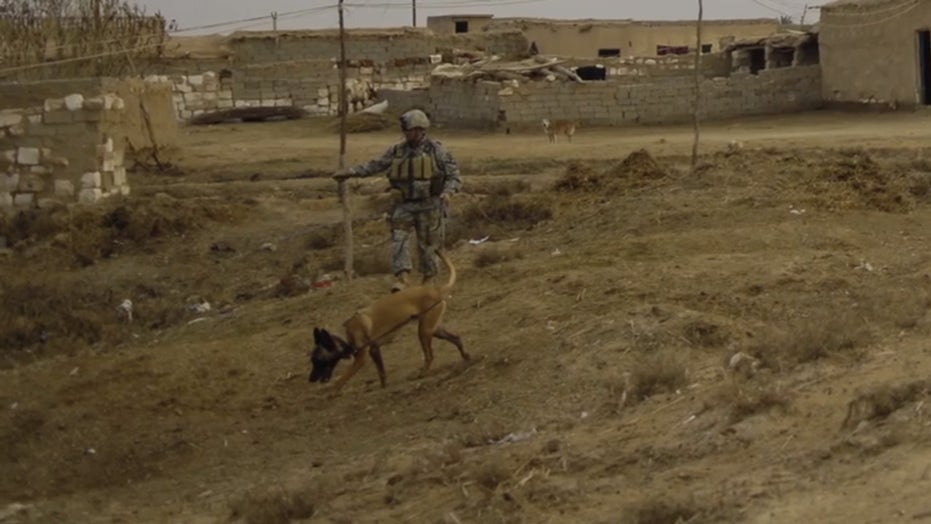 Veteran reunited with military working dog that saved his life