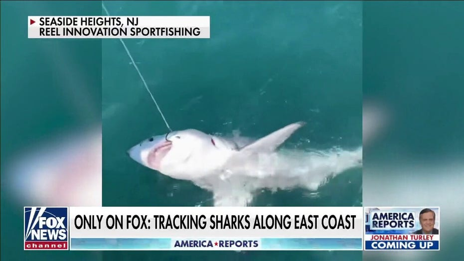 Florida boy, 12, attacked by shark; second youth bitten in Volusia County this week: reports