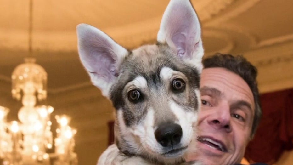 Cuomo responds after report he abandoned dog at executive mansion