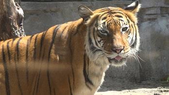 Zoos struggle with animal care costs amid coronavirus closures