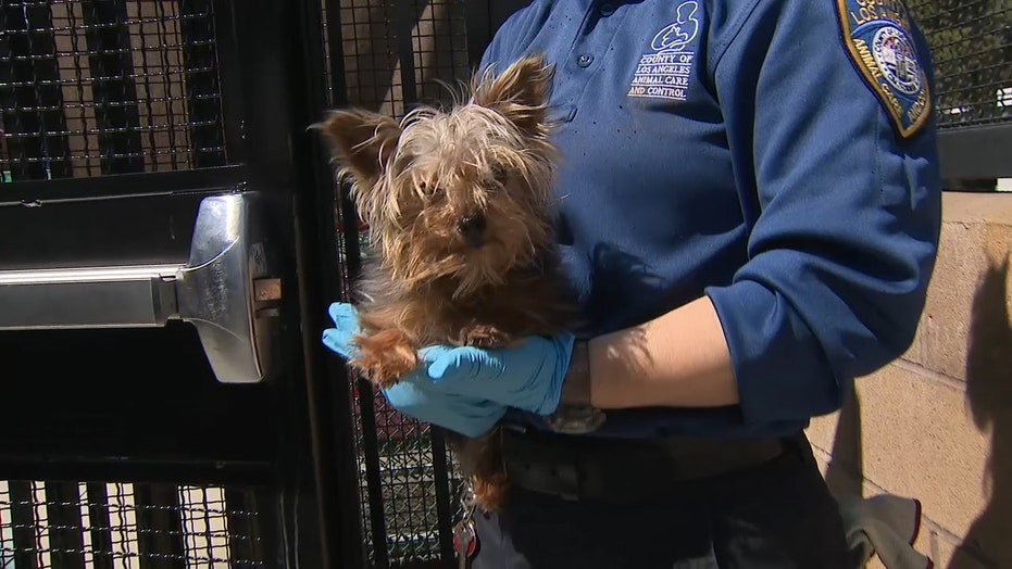 Dog fostering and adoption up 700 percent during coronavirus