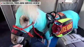 Fred the mini horse takes his first flight
