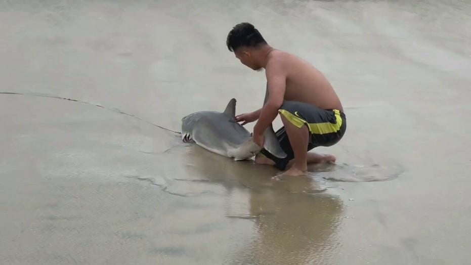 Man rescues great white shark after it gets caught in fishing line at California beach