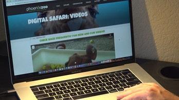 Phoenix Zoo goes digital amid coronavirus closure